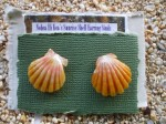 Hawaiian Sunrise shell stud earrings